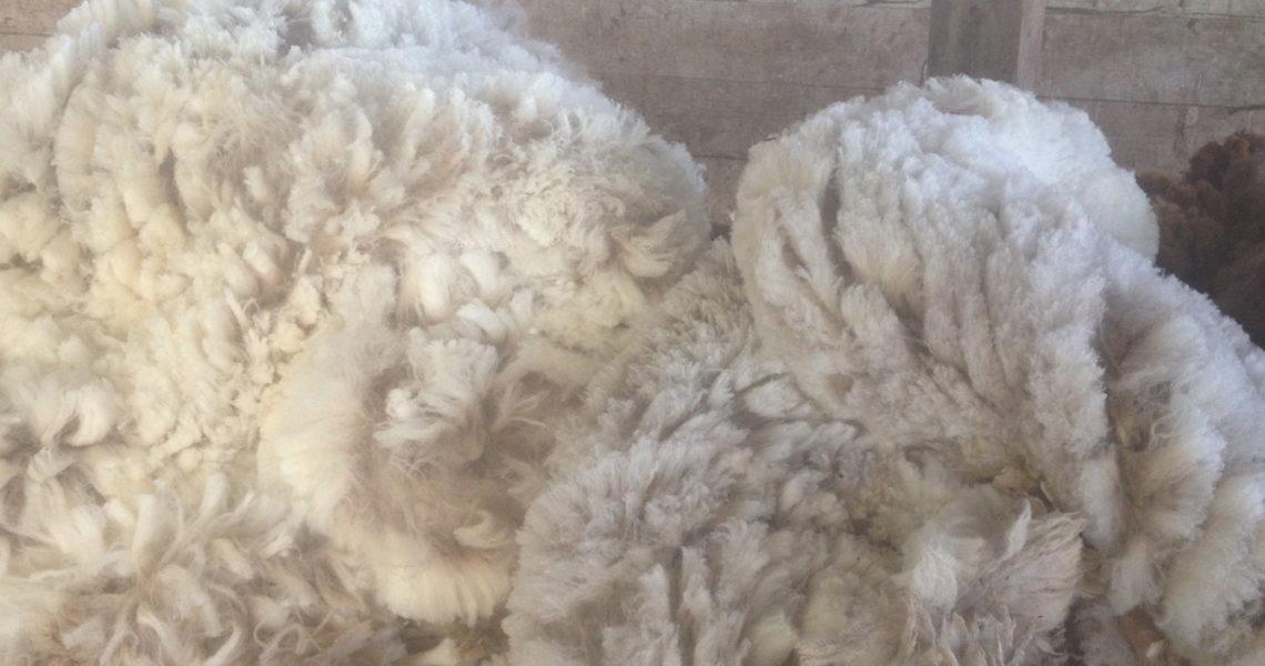 merino-wool